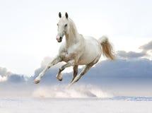 Caballo blanco en el cielo Fotografía de archivo