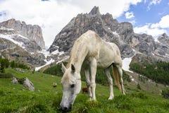 Caballo blanco en el fondo del macizo de Marmolada Val Rosalia, dolomías, Italia foto de archivo libre de regalías