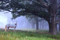 Caballo blanco en la niebla azul Fotos de archivo