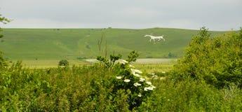 Caballo blanco, Geoglyphs foto de archivo libre de regalías