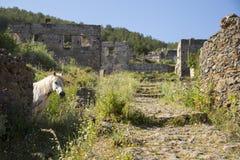 Caballo blanco que mira la cámara en las ruinas del pueblo fantasma de un Kayakoy del pueblo Fotos de archivo libres de regalías