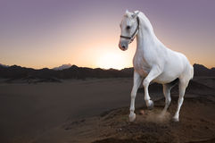 Caballo blanco y puesta del sol en el desierto Imagenes de archivo