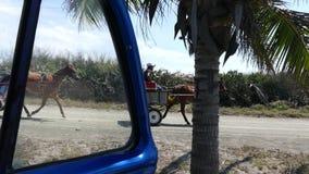 Caballo carro campaña Varadero Cuba abril de 2018 metrajes
