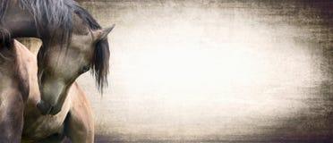 Caballo con el cuello maravillosamente curvado en el fondo de la textura, bandera Imagen de archivo