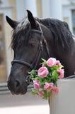 Caballo con las flores Fotografía de archivo