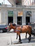 Caballo a continuación Albertina Museum, Viena Fotos de archivo libres de regalías