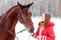 Caballo de bahía de alimentación del adolescente en campo del invierno Foto de archivo