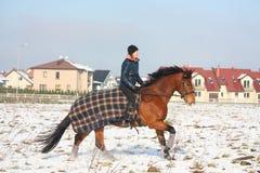 Caballo de bahía del montar a caballo de la muchacha del adolescente en invierno Fotos de archivo libres de regalías
