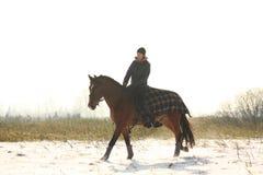 Caballo de bahía del montar a caballo de la muchacha del adolescente en invierno Imagen de archivo libre de regalías