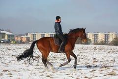 Caballo de bahía del montar a caballo de la muchacha del adolescente en invierno Imágenes de archivo libres de regalías