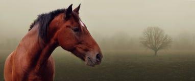 Caballo de Brown en niebla Fotografía de archivo libre de regalías