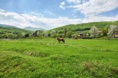 Caballo de Brown en pasto Montañas cárpatas Verano Fotografía de archivo libre de regalías