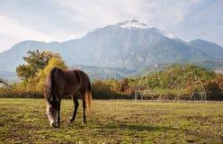 Caballo de Brown que hojea cerca de las altas montañas hermosas Imagenes de archivo