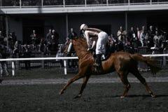 Caballo de carreras Fotos de archivo