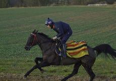 Caballo de carreras en los galopes en Shropshire Imagen de archivo