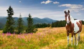 Caballo de granja en un pasto en montañas imágenes de archivo libres de regalías