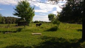 Caballo de granja soleado imagen de archivo