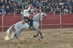 Caballo de la lucha de Bull Fotos de archivo