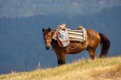 Caballo de la montaña Fotografía de archivo