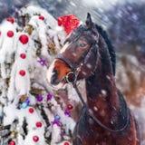 Caballo de la Navidad Fotografía de archivo libre de regalías