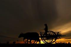 - Caballo de labranza - carro casero de Bull que viene - transporte Fotografía de archivo libre de regalías
