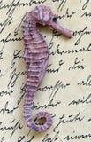 Caballo de mar en carta Fotografía de archivo