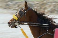 Caballo de montar a caballo Imagen de archivo libre de regalías