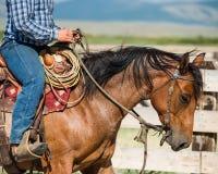 Caballo de montar a caballo Fotografía de archivo libre de regalías