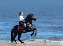Caballo de montar a caballo de la mujer en la playa del mar El semental se coloca en las piernas traseras Imagen de archivo libre de regalías