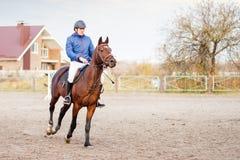Caballo de montar a caballo del deportista en el entrenamiento ecuestre Foto de archivo libre de regalías