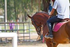 Caballo de montar a caballo del hombre Fotos de archivo
