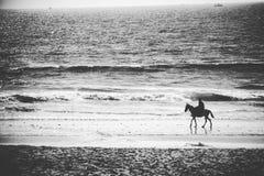 Caballo de montar a caballo del hombre en la playa Fotos de archivo libres de regalías