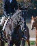 Caballo de montar a caballo del jinete Fotografía de archivo