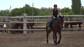 Caballo de montar a caballo Muchacha en el montar a caballo hermoso en manege almacen de metraje de vídeo