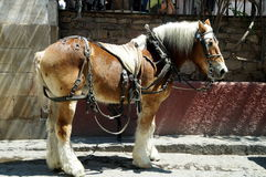 Caballo de Perchero en México fotos de archivo