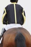 Caballo de raza con el jinete listo para correr Área del prado Imágenes de archivo libres de regalías