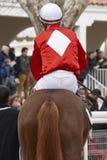 Caballo de raza con el jinete listo para correr Área del prado Imagen de archivo