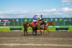 Caballo de raza en el título de la pista hacia la puerta del comienzo Fotografía de archivo
