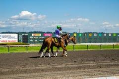 Caballo de raza en el título de la pista hacia la puerta del comienzo Imagen de archivo