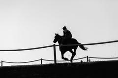 Caballo de raza que corre blanco negro Fotos de archivo
