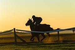 Caballo de raza Rider Running Dawn fotos de archivo libres de regalías