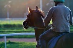 Caballo de raza y el jinete temprano por la mañana en un hipódromo Imagenes de archivo