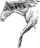 Caballo de Stridig stock de ilustración
