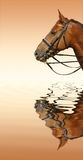 Caballo del alazán Foto de archivo