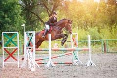 Caballo del alazán del montar a caballo de la chica joven en el salto de la demostración Fotos de archivo
