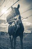 Caballo del día soleado Foto de archivo libre de regalías