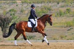 Caballo del dressage de la bahía del montar a caballo de la muchacha Foto de archivo libre de regalías