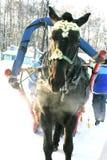 Caballo del invierno Fotografía de archivo libre de regalías