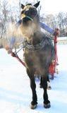 Caballo del invierno Fotos de archivo