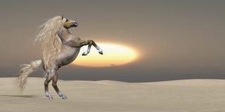 Caballo del Palomino de la duna de arena ilustración del vector